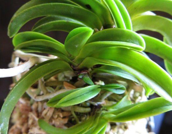 New World Orchids December Sales List