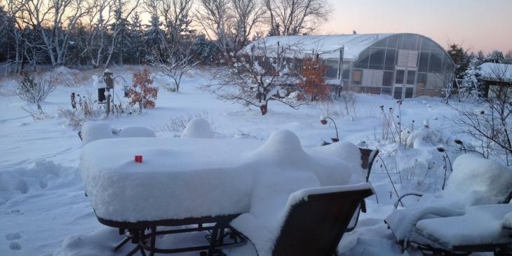 Neofinetia Care:  now that it's winter...