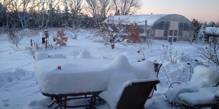 Neofinetia Care:  now that it's winter…