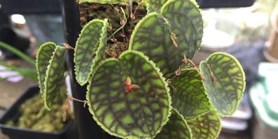 Summer 2016:  Cool Growing Orchids