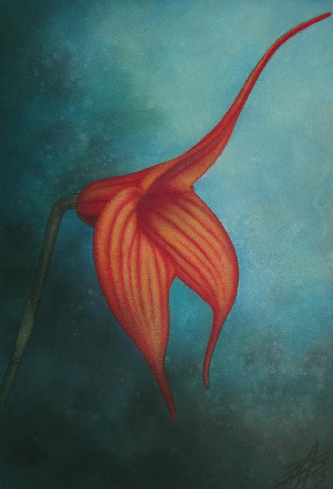 masdevallia painting