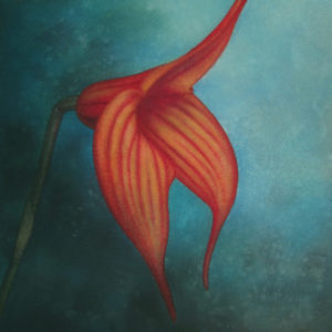 Masdevallia art detail